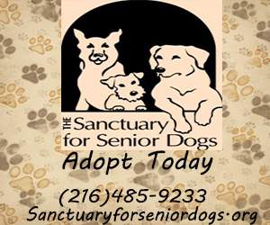 sanctuary for senior dogs banner 1